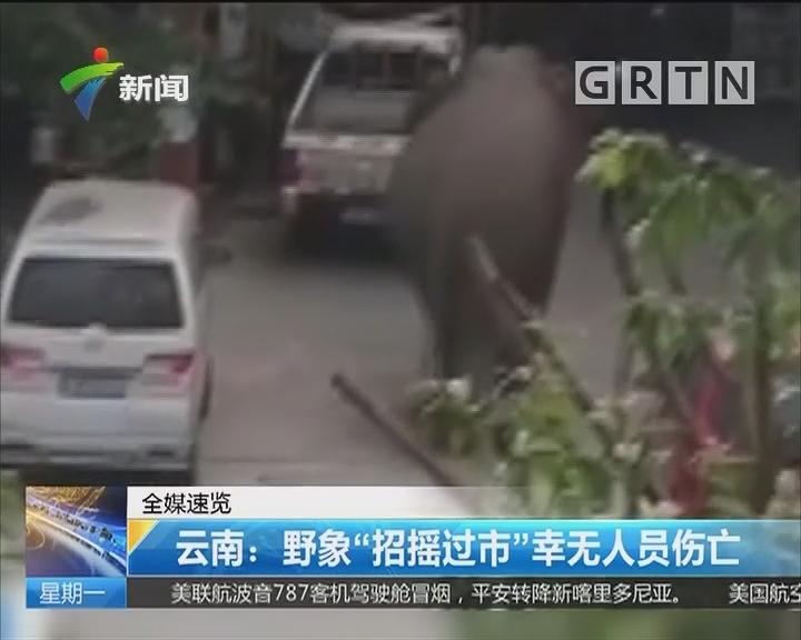 """云南:野象""""招摇过市""""幸无人员伤亡"""