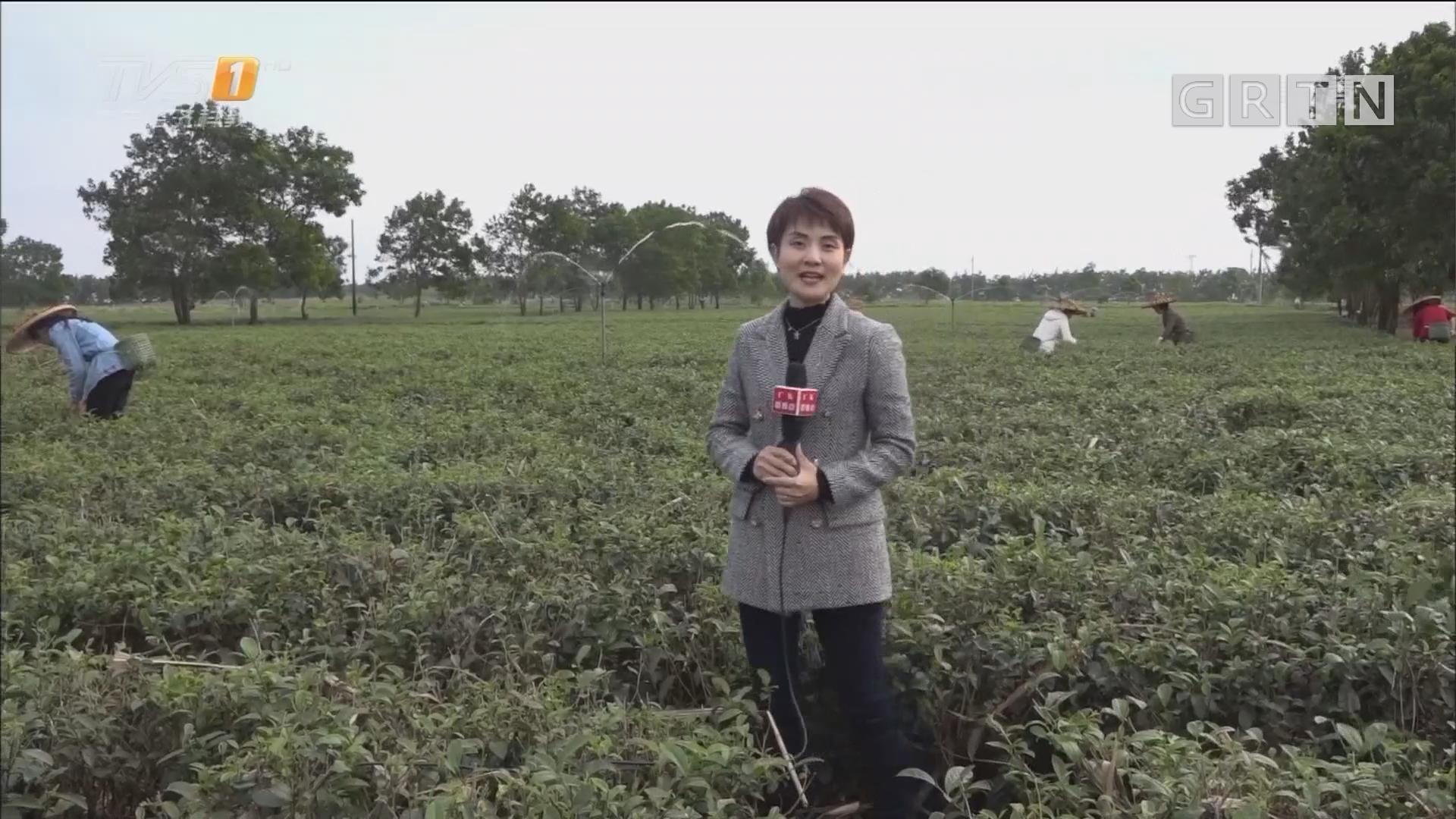 [HD][2019-03-23]广东新焦点