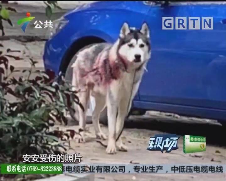 珠海:受伤小狗被遗弃 热心街坊齐救助