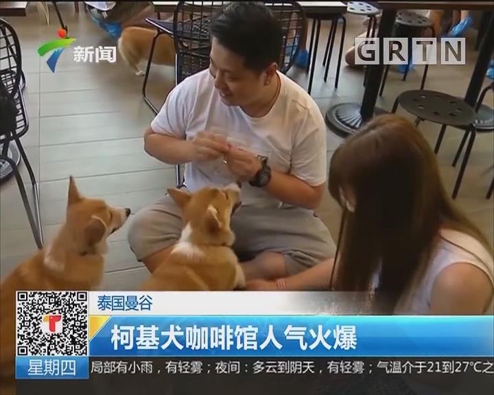 泰国曼谷:柯基犬咖啡馆人气火爆