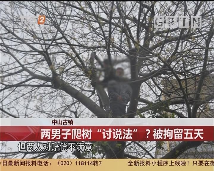 """中山古镇:两男子爬树""""讨说法""""?被拘留五天"""
