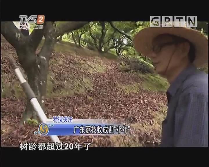 """广东荔枝收成迎""""小年"""""""