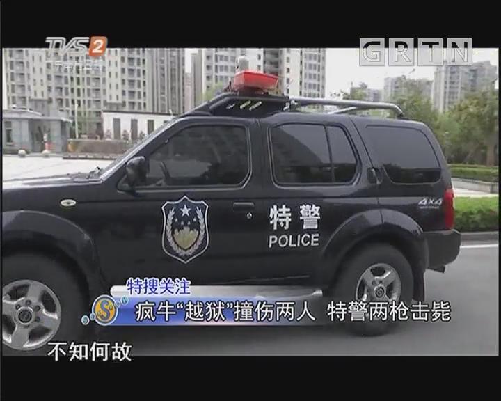 """疯牛""""越狱""""撞伤两人 特警两枪击毙"""