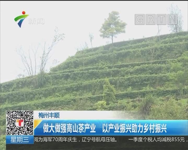 梅州丰顺:做大做强高山茶产业 以产业振兴助力乡村振兴