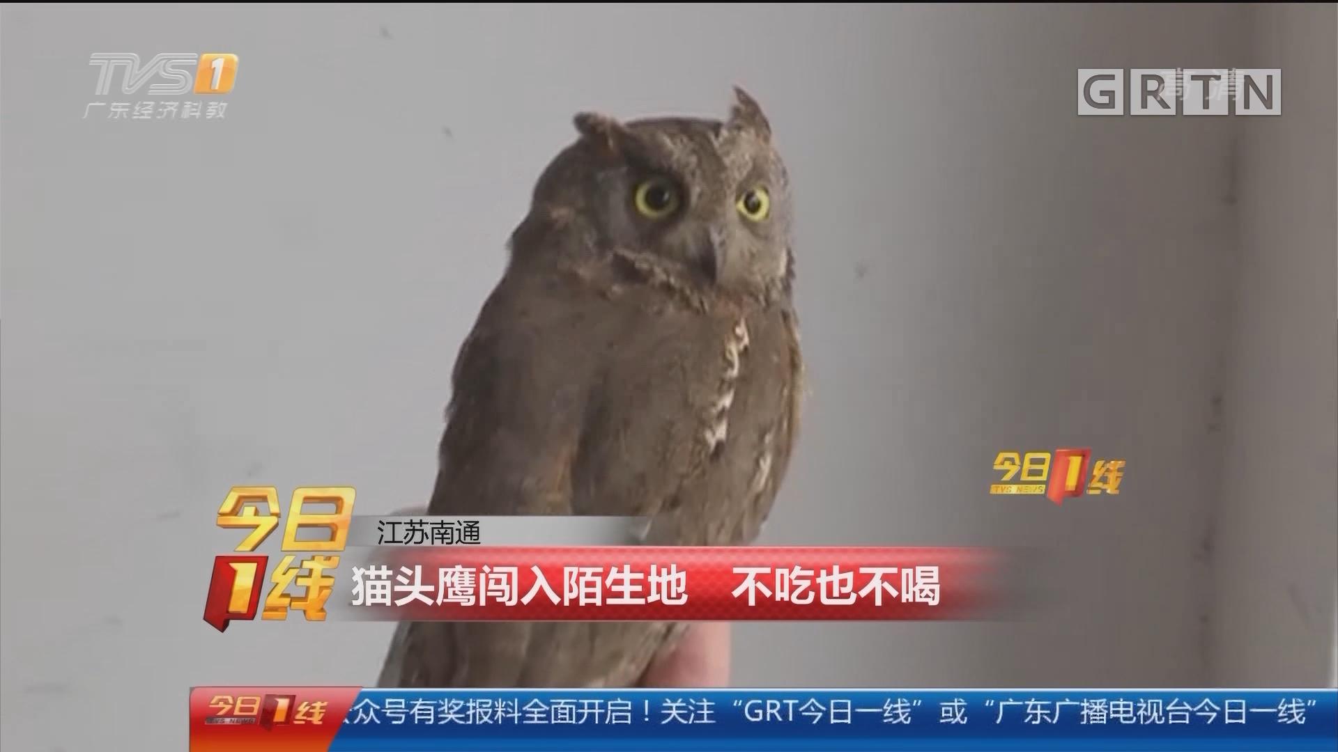 江苏南通:猫头鹰闯入陌生地 不吃也不喝