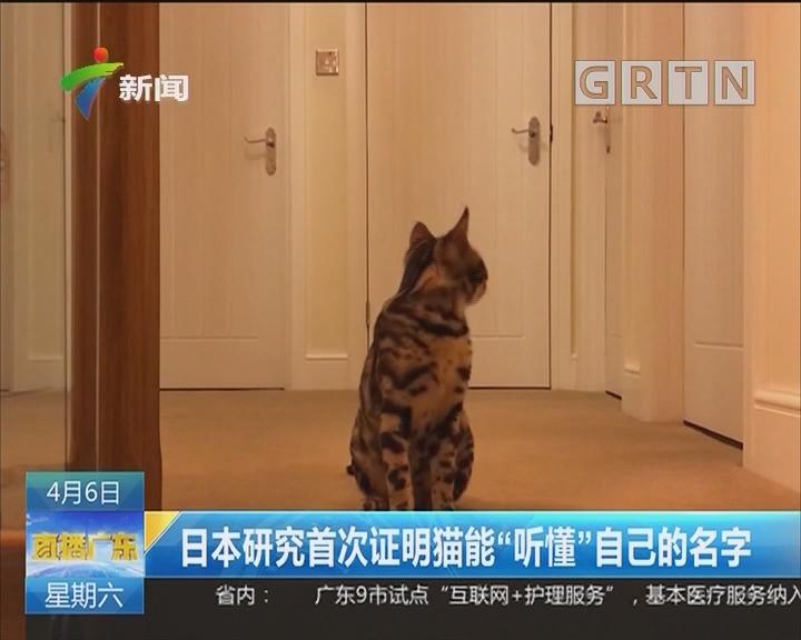 """日本研究首次证明猫能""""听懂""""?#32422;?#30340;名字"""