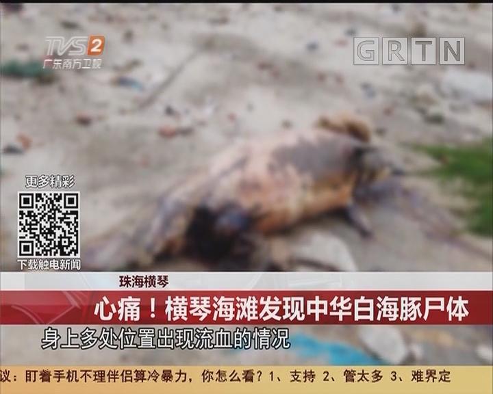 珠海横琴:心痛!横琴海滩发现中华白海豚尸体