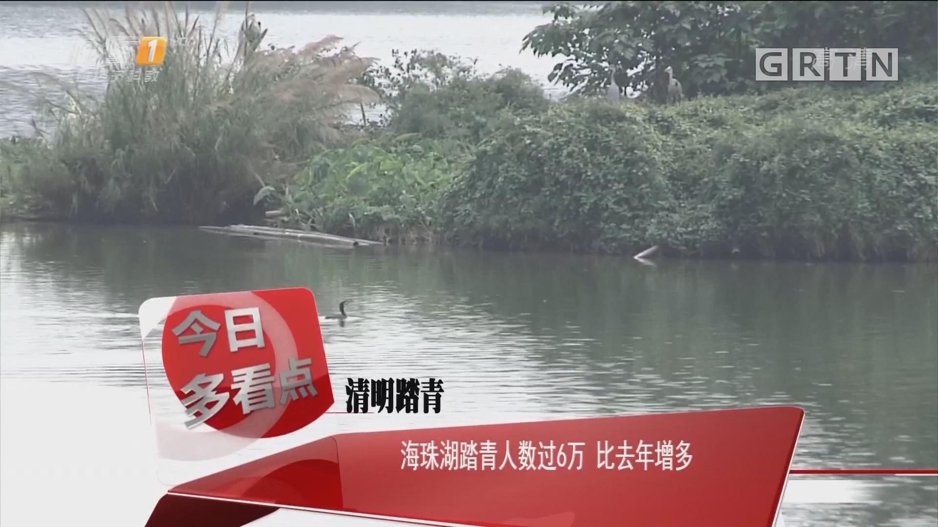 清明踏青:海珠湖踏青人数过6万 比去年增多