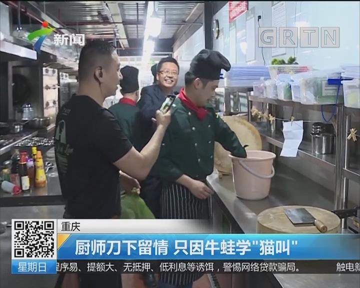 """重庆:厨师刀下留情 只因牛蛙学""""猫叫"""""""