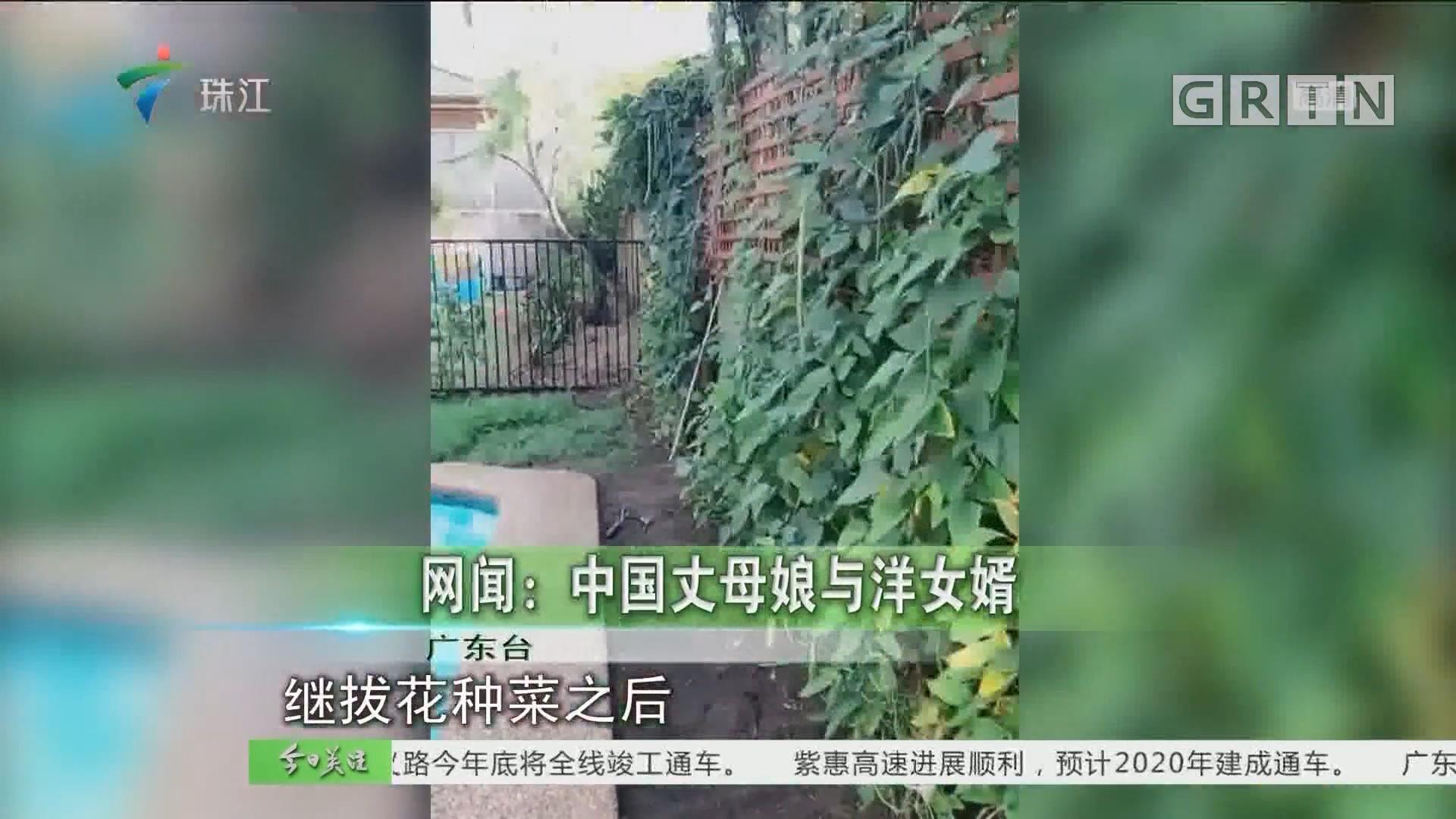網聞:中國丈母娘與洋女婿