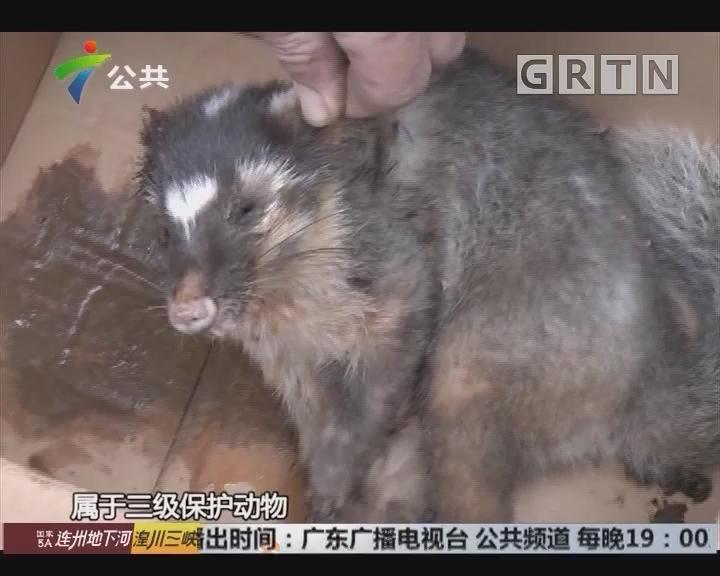 深圳:受伤动物惊现小区 清洁工救助无果