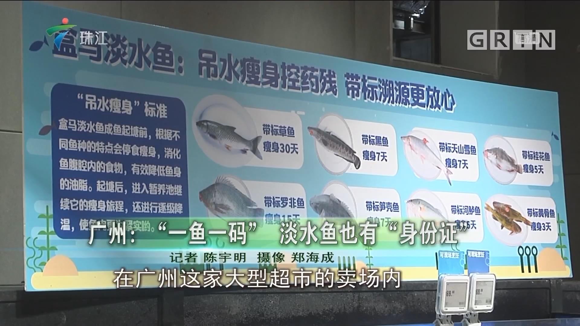 """广州:""""一鱼一码"""" 淡水鱼也有""""身份证"""""""