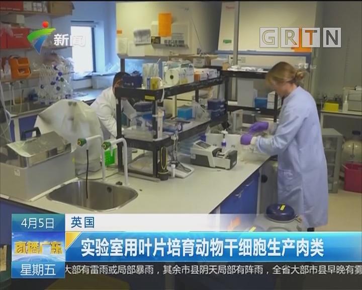 英国:实验室用叶片培育动物干细胞生产肉类