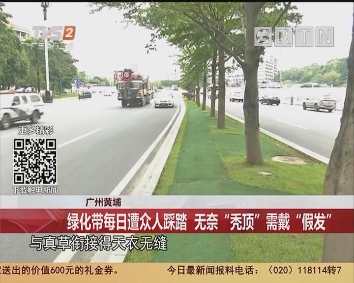 """广州黄埔:绿化带每日遭众人踩踏 无奈""""秃顶""""需戴""""假发"""""""
