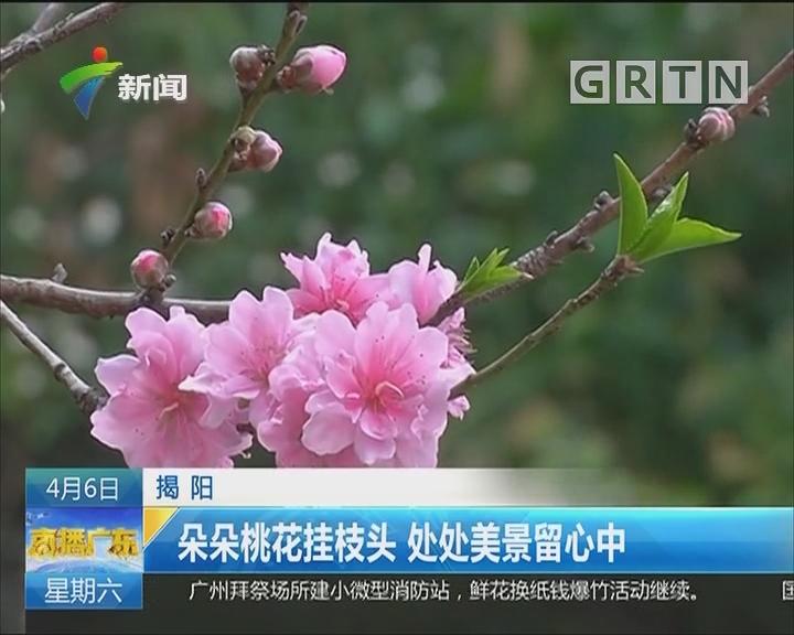 揭阳:朵朵?#19968;?#25346;枝头 处处美景留心中