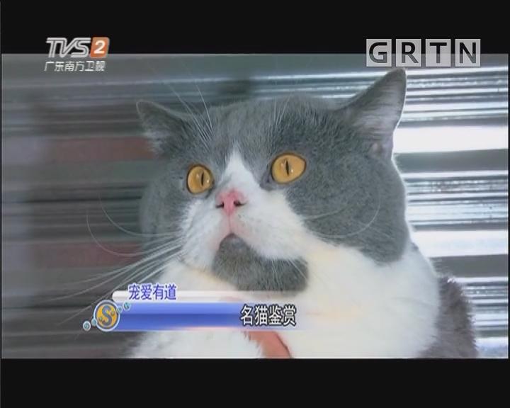 宠爱有道:名猫鉴赏