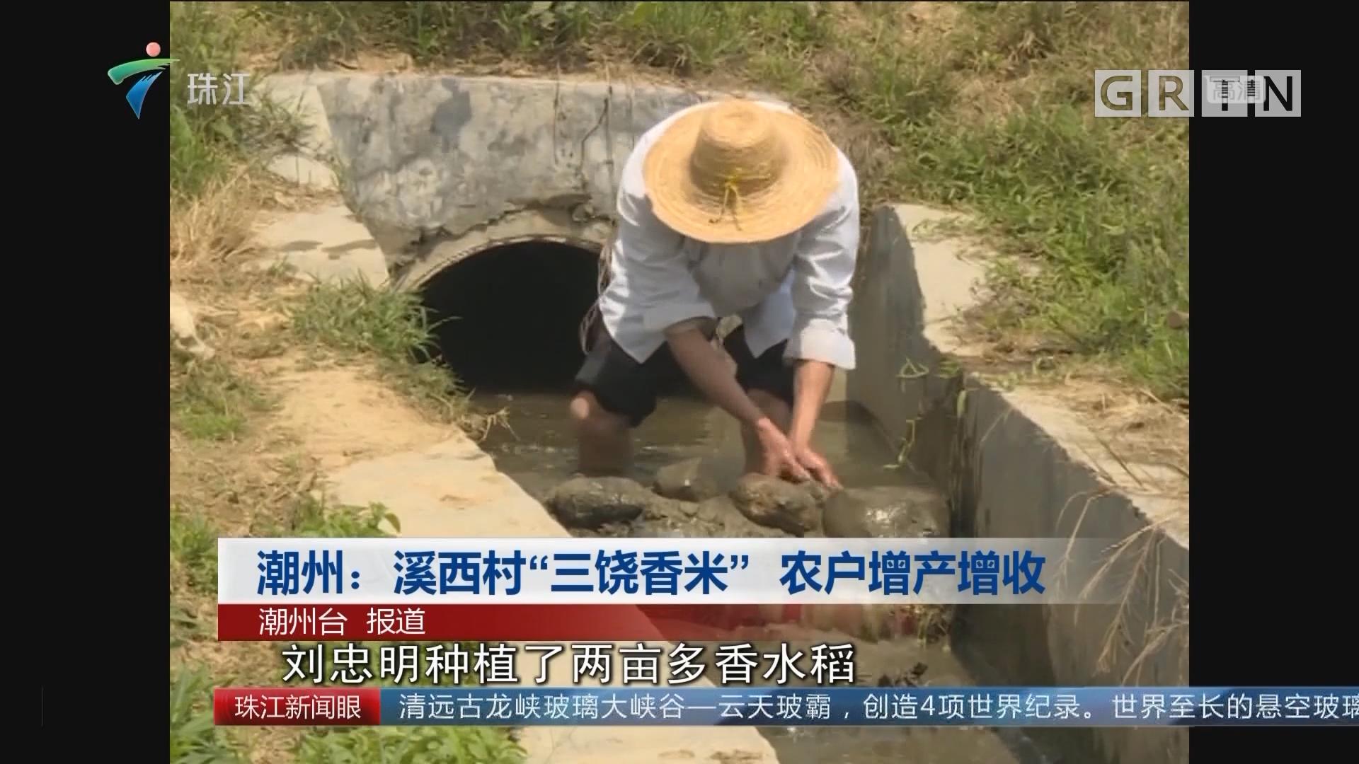 """潮州:溪西村""""三饶香米"""" 农户增产增收"""