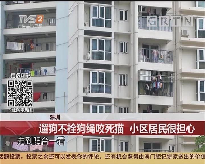 深圳:遛狗不拴狗绳咬死猫 小区居民很担心