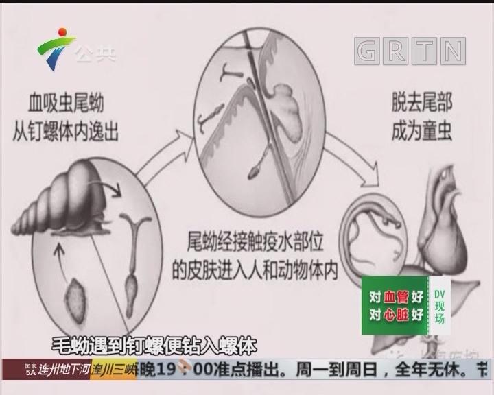 韶关:荒地里发现活体钉螺 为发现感染病例