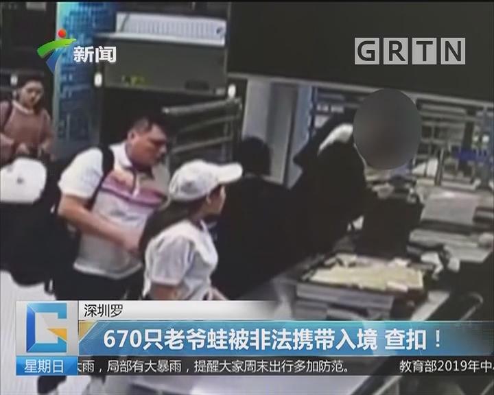 深圳罗湖:670只老爷蛙被非法携带入境 查扣!