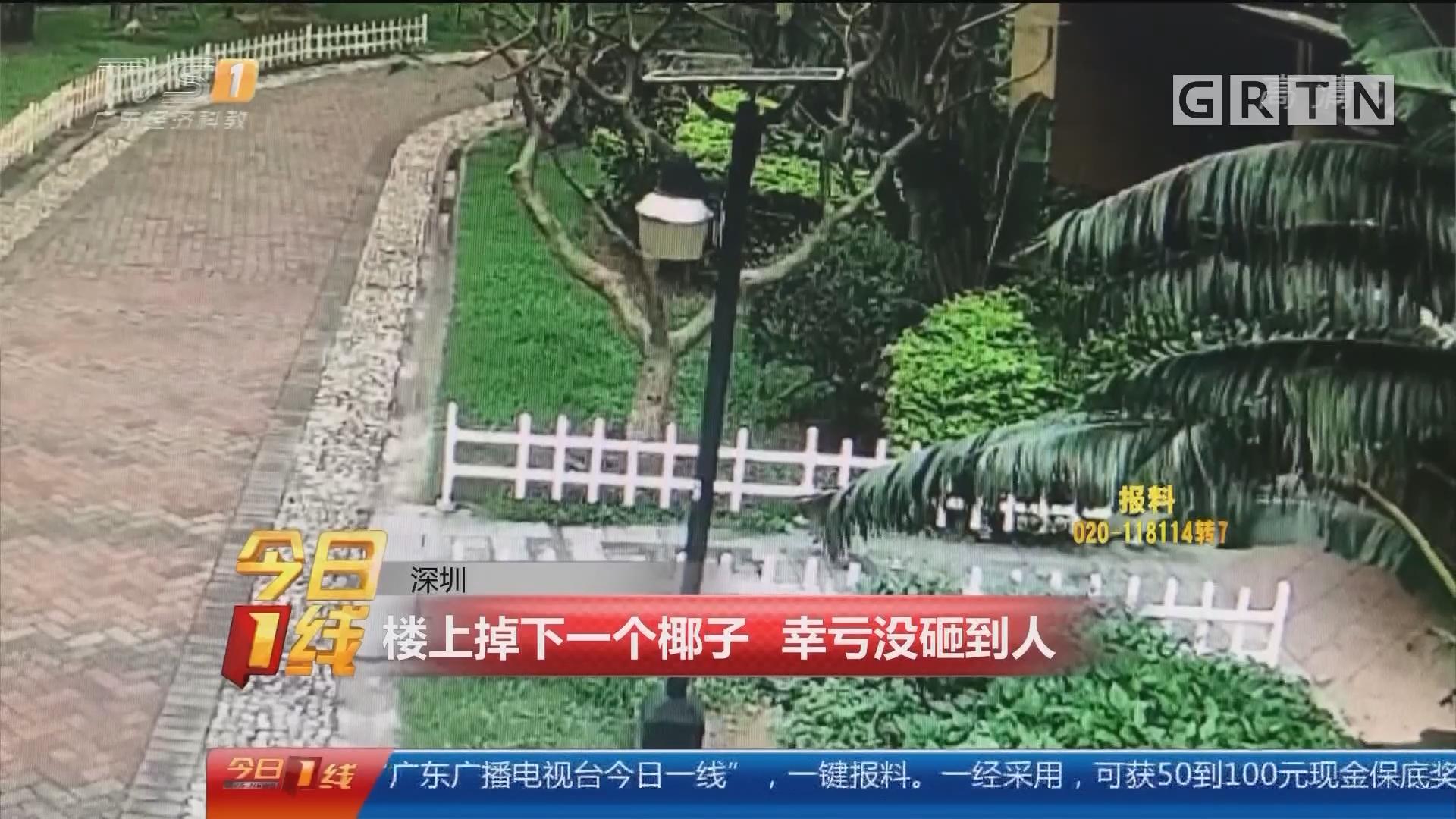 深圳:楼上掉下一个椰子 幸亏没砸到人