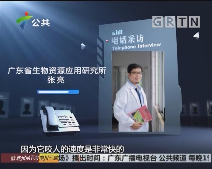 江门:工厂内惊现大蛇 疑似含有剧毒