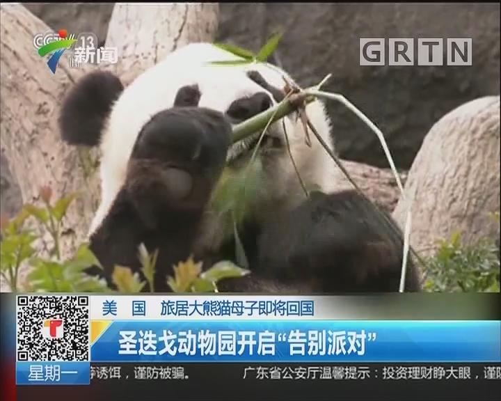 """美国:旅居大熊猫母子即将回国 圣迭戈动物园开启""""告别派对"""""""