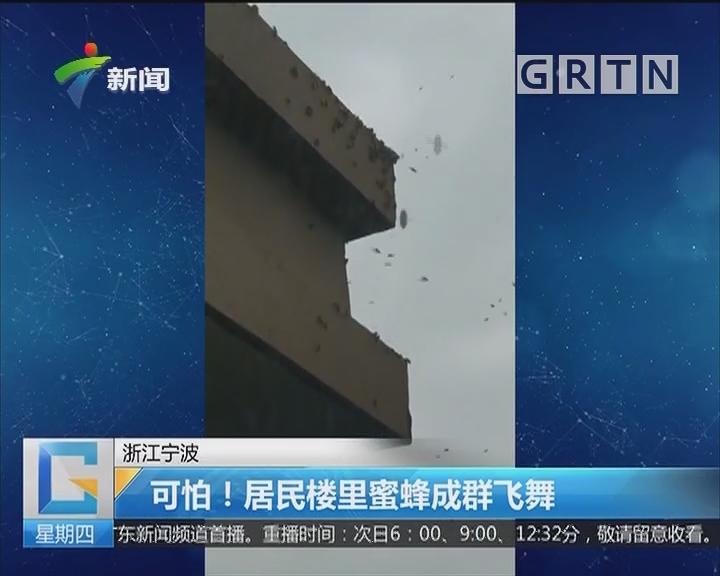 浙江宁波:可怕!居民楼里蜜蜂成群飞舞