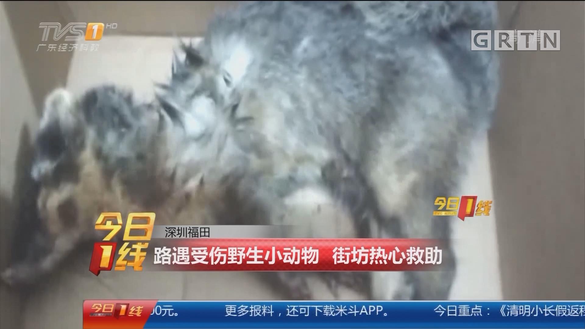 深圳福田:路遇受伤野生小动物 街坊热心救助