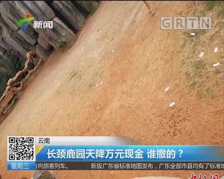 云南:长颈鹿园天降万元现金 谁撒的?