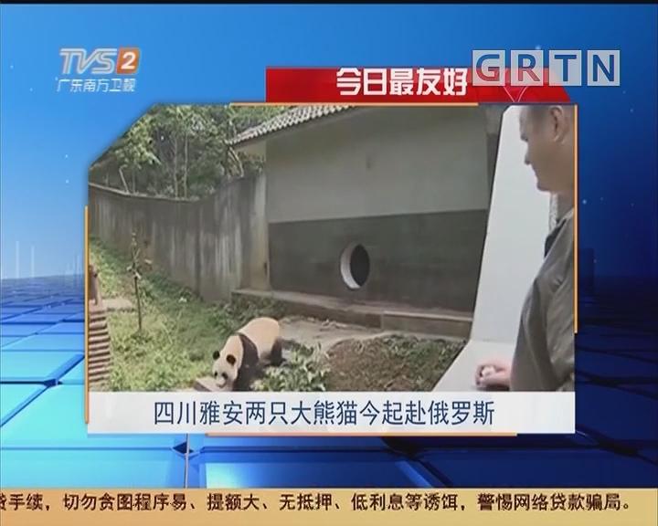 今日最友好:四川雅安两只大熊猫今起赴俄罗斯