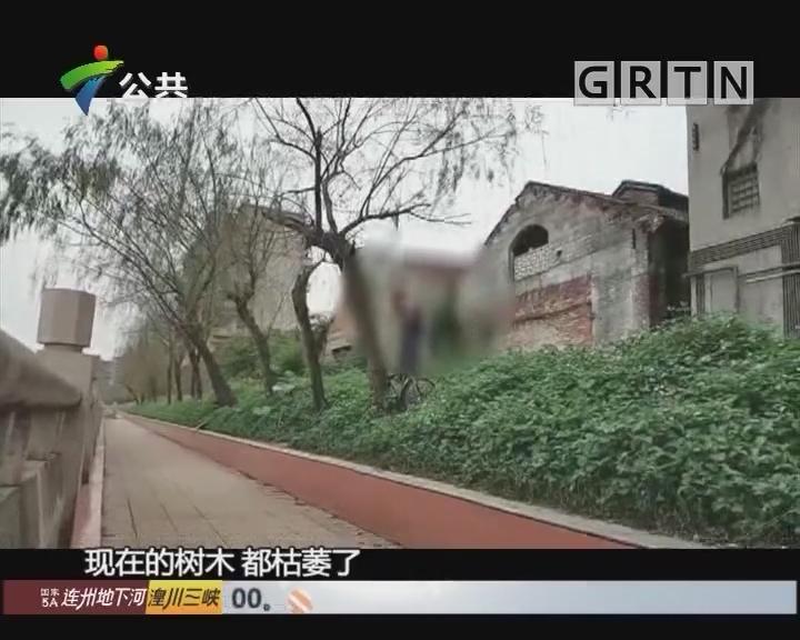 """佛山:市民清明扎堆偷摘枝条 柳树被折""""秃"""""""