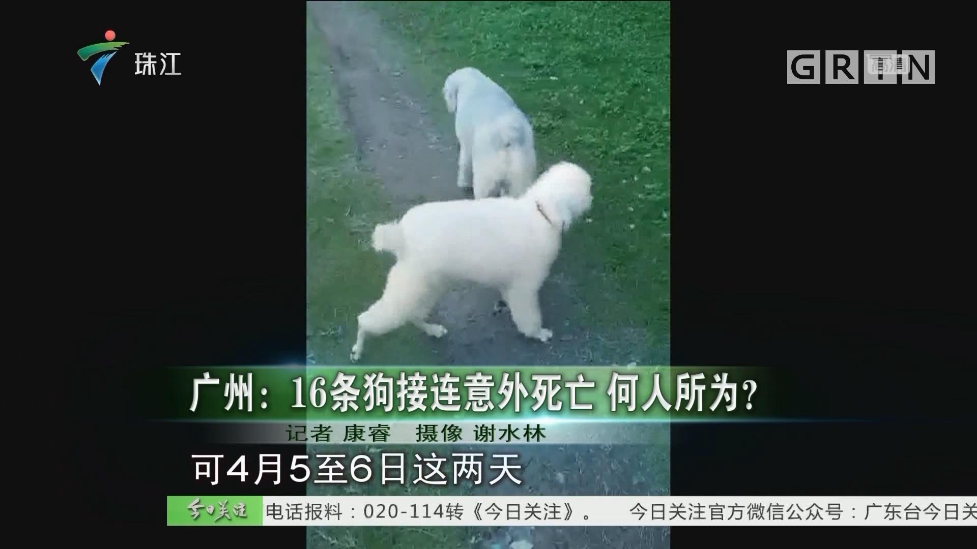 广州:16条狗接连意外死亡 何人所为?
