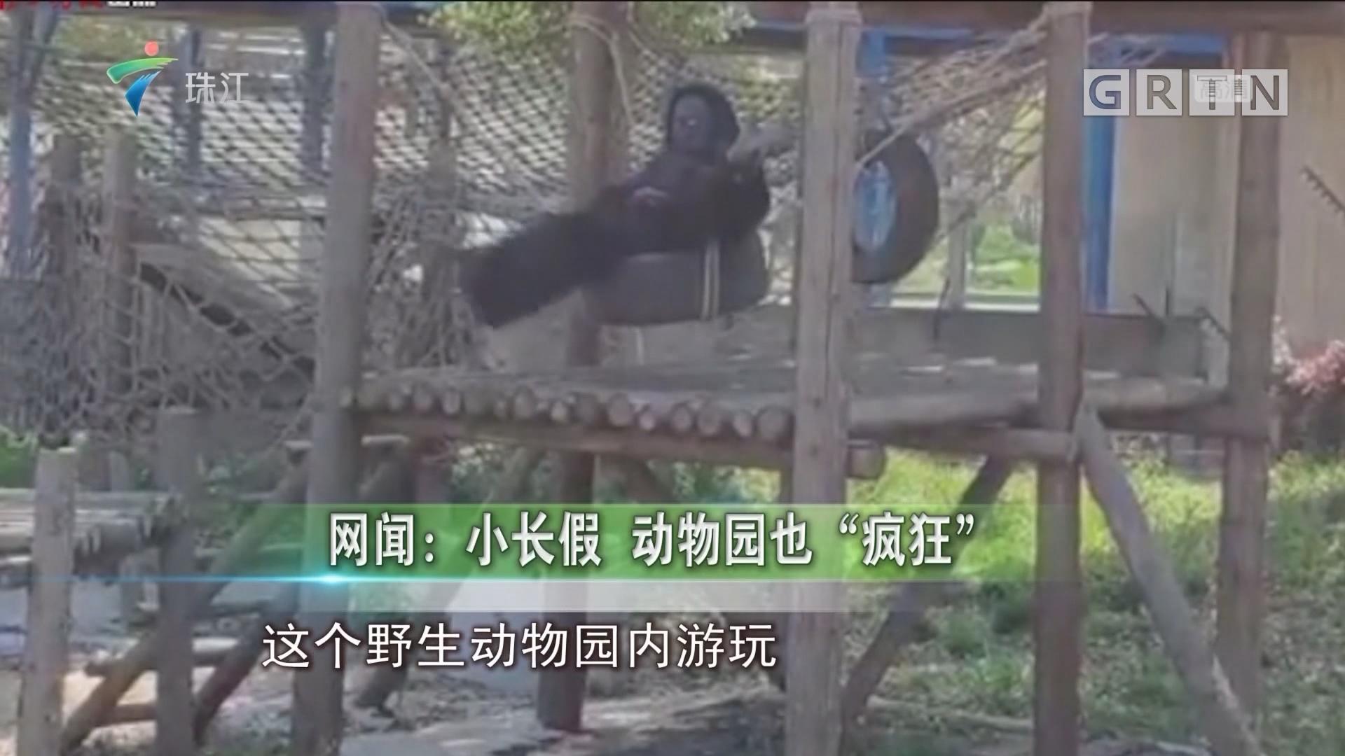 """网闻:小长假 动物园也""""疯狂"""""""