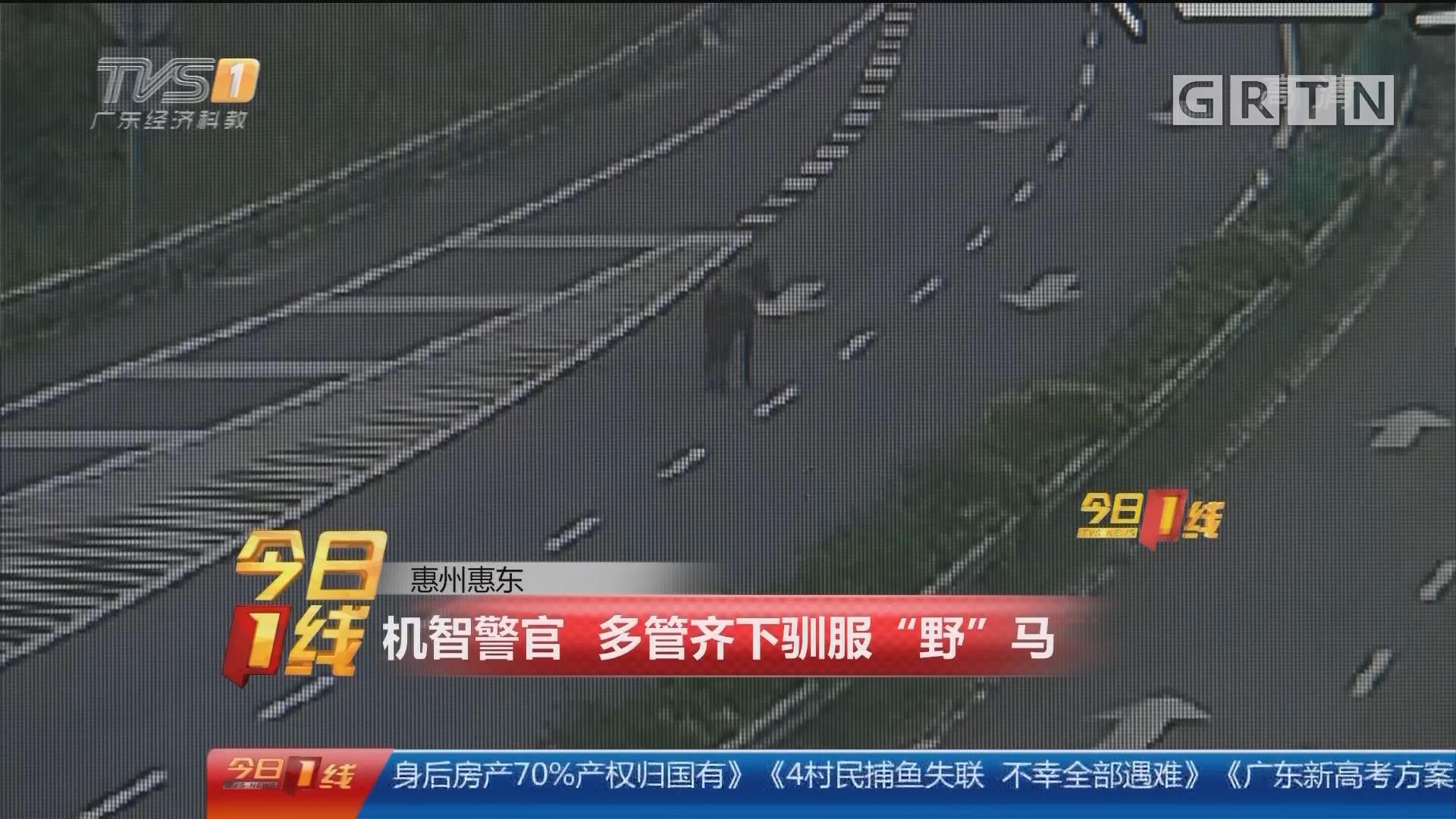 """惠州惠东:机智警官 多管齐下驯服""""野""""马"""