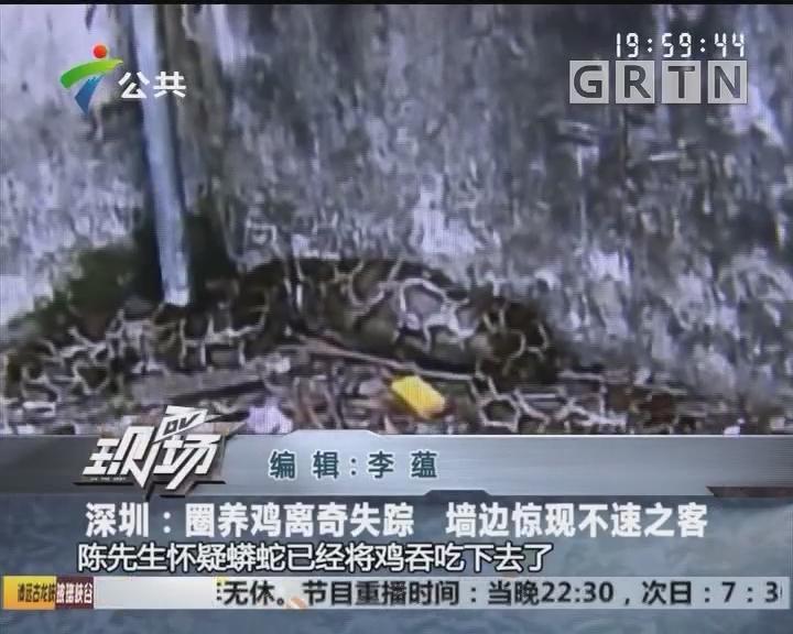 深圳:圈养鸡离奇失踪 墙边惊现不速之客
