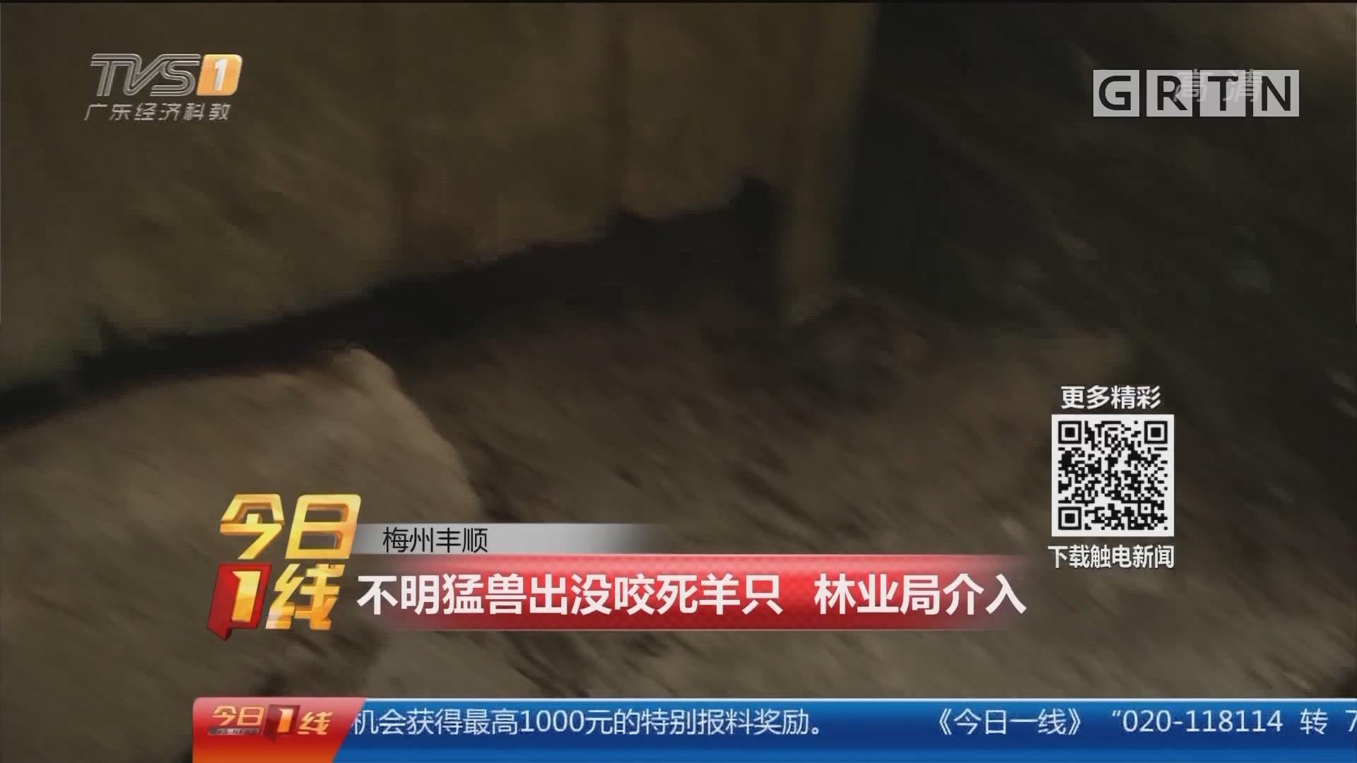 梅州丰顺:不明猛兽出没咬死羊只 林业局介入
