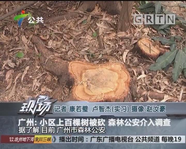广州:小区上百棵树被砍 森林公安介入调查