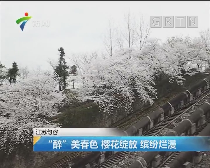 """江苏句容:""""醉""""美春色 樱花绽放 缤纷烂漫"""