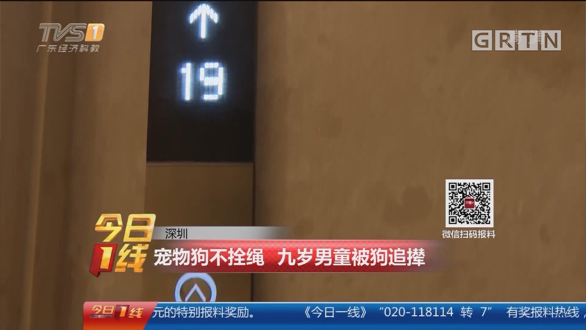 深圳:宠物狗不拴绳 九岁男童被狗追撵