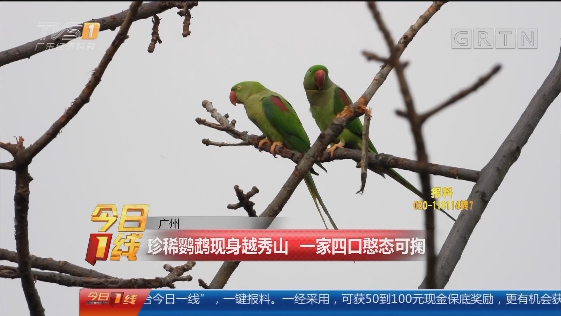 广州:珍稀鹦鹉现身越秀山 一家四口憨态可掬