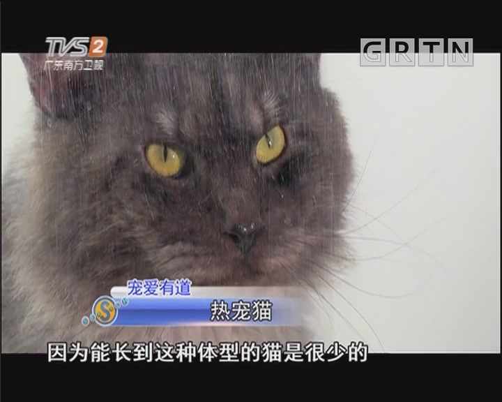 宠爱有道:热宠猫