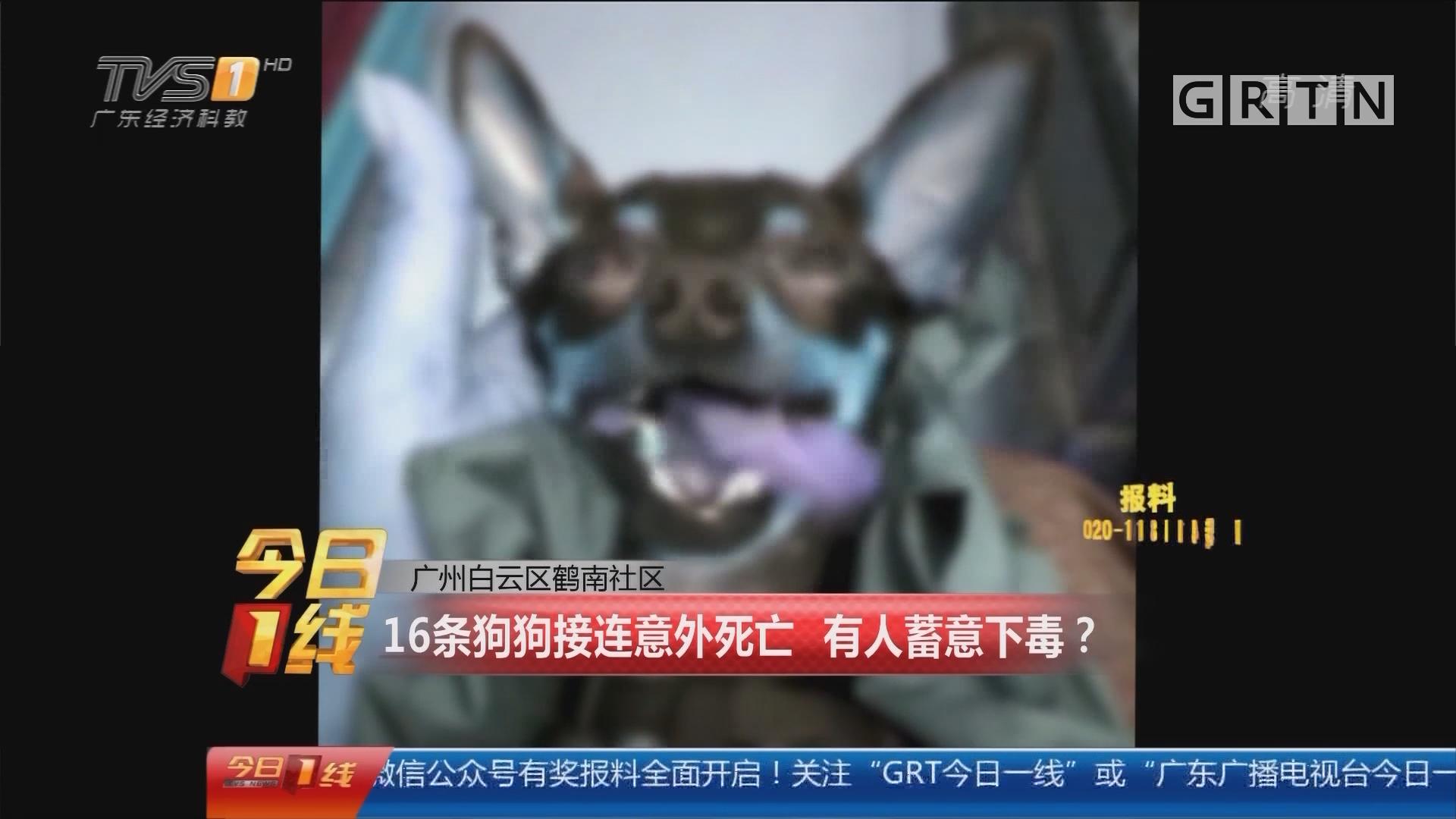 广州白云区鹤南社区:16条狗狗接连意外死亡 有人蓄意下毒?