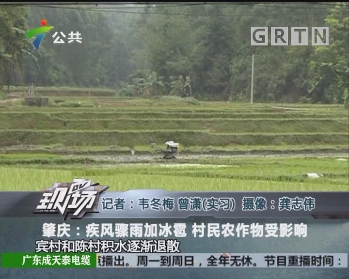 肇庆:疾风骤雨加冰雹 村民农作物受影响