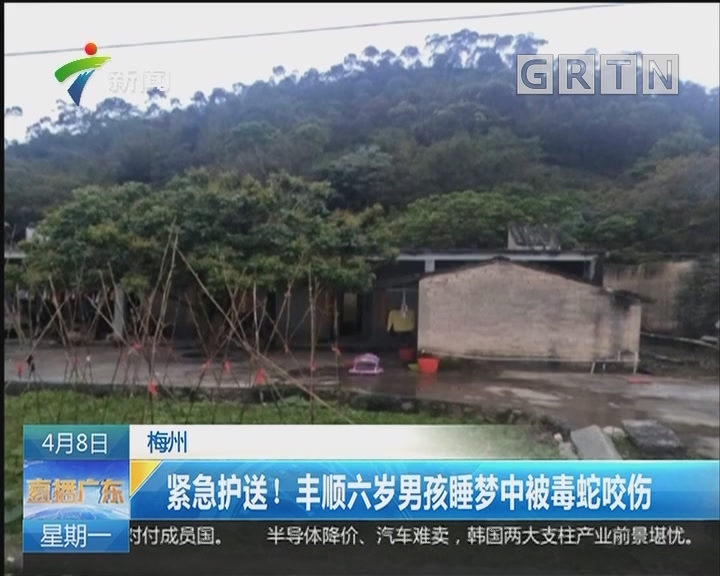 梅州:紧急护送!丰顺六岁男孩睡梦中被毒蛇咬伤