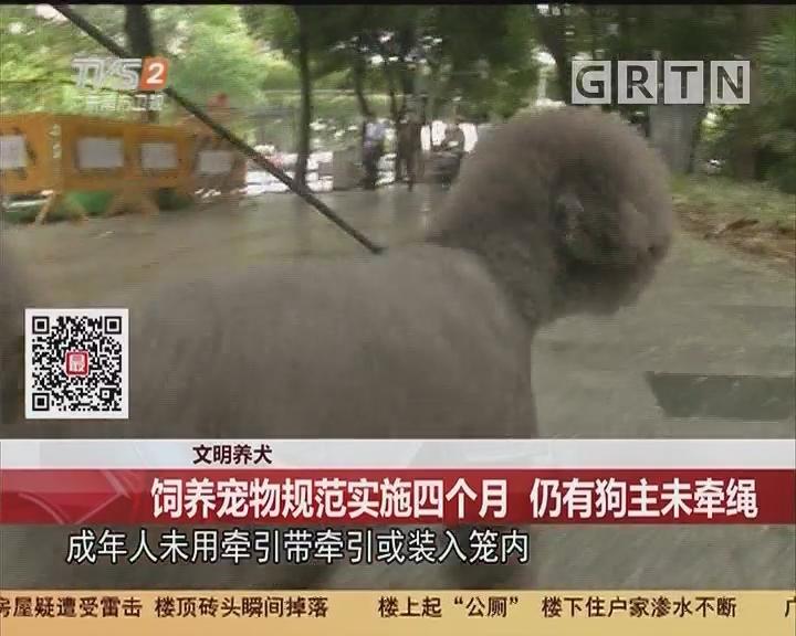 文明养犬:饲养宠物规范实施四个月 仍有狗主未牵绳