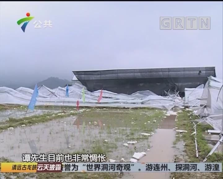 增城:冰雹砸坏果园 果农损失严重