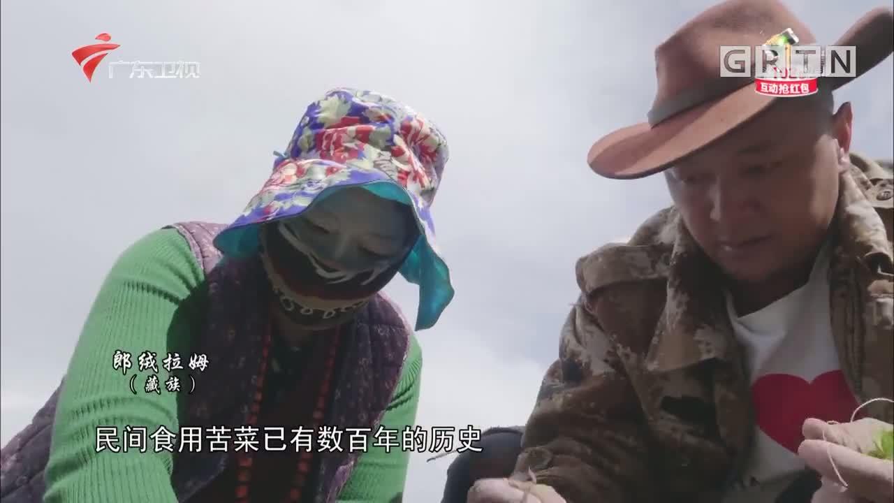 紫花苦菜 秘境神草第二季第四集