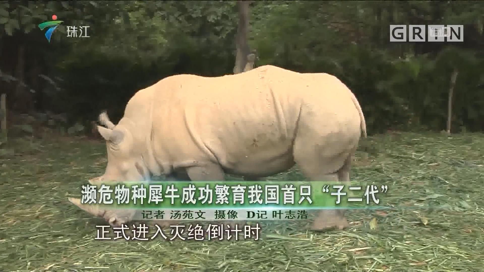 """濒危物种犀牛成功繁育我国首只""""子二代"""""""