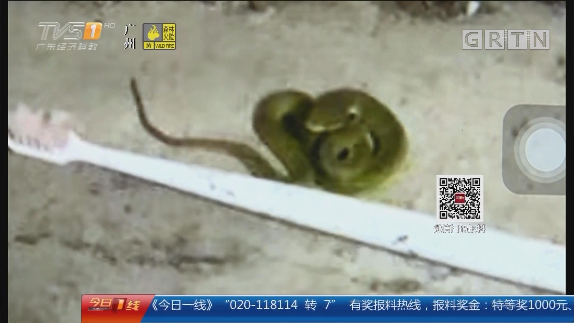 """广州:校园""""蛇影""""频出没 学生心惊胆战"""